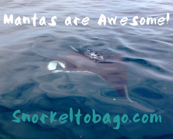 a manta visiting our boat