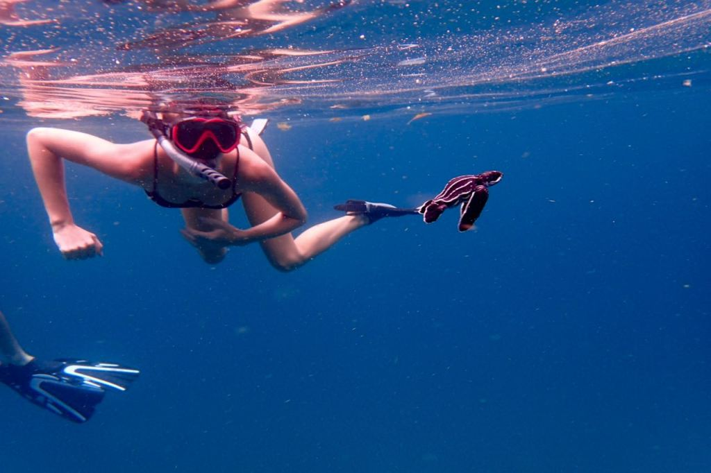 Snorkelling with Leatherback Turtles