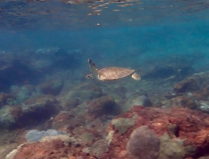 Snorkeling with Turtles in Tobago