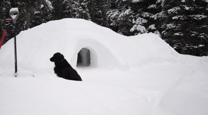 Dogs love snow forts and snow tunnels too. Just keep your eye out for yellow snow!