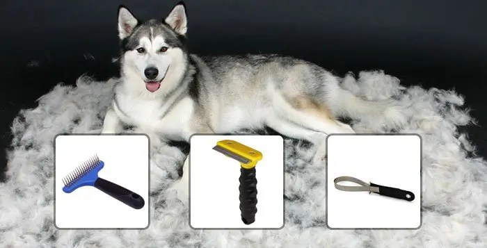 How To Groom Your Husky - Snowdog Guru