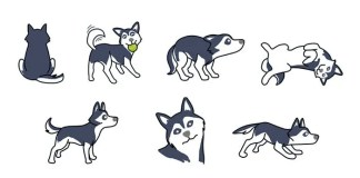 Husky Body Language
