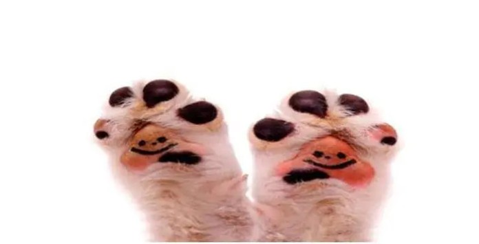husky paws