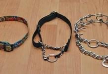 Various husky collars