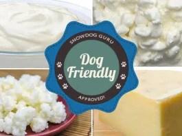 Dog Friendly Dairy