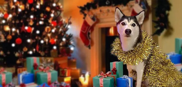 top 10 toys for your husky this christmas - Husky Christmas Decoration