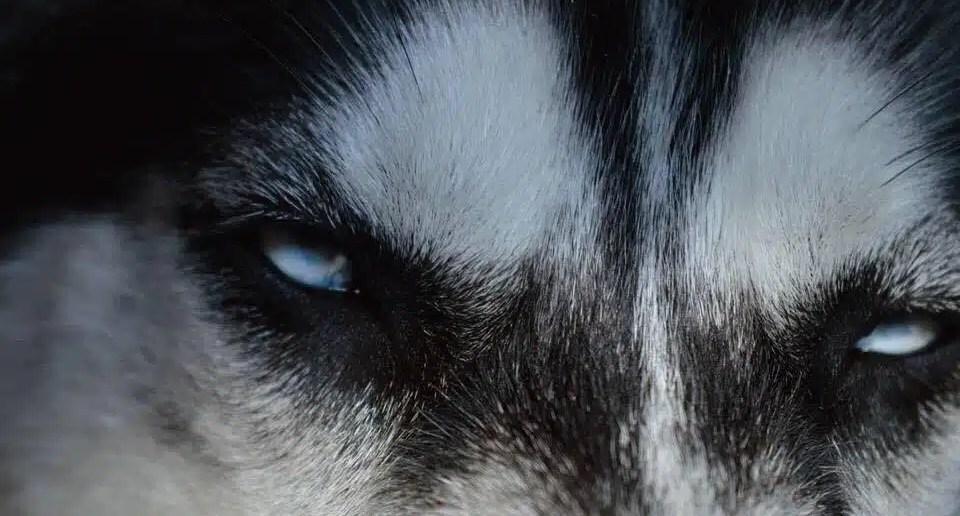 Anuko eyes