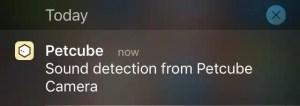 Petcube Camera Notification