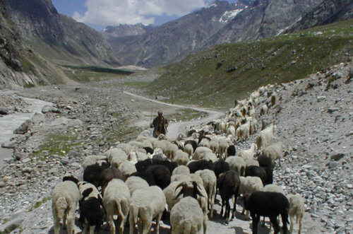 Livestock herders can make a big difference for conservation. Photo: NCF India / Snow Leopard Trust