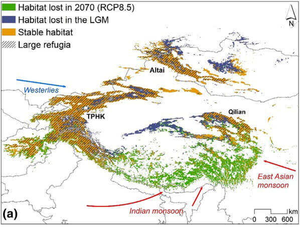 Climate refugia of snow leopards. Overlap of current snow leopard habitat with habitat in the LGM and in 2070 (RCP8.5). Habitat that persists from the LGM to 2070 (RCP8.5) is colored orange and the three large refugia are indicated by hatched lines. The westerlies and Asian monsoon, which are the dominant atmospheric circulation systems in High Asia, are indicated by blue and red arrows, respectively.