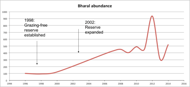 Trends in abundance of bharal Pseudois nayaur in the Kibber region, Spiti Valley, India. The population was monitored one to several times each year during spring and autumn, periods when herds are congregated. Figures presented are maximum counts for a given year. Dashed arrow on the left indicates the establishment of a 500 ha village reserve or grazing set aside in the area, which was then expanded to 2000 ha in 2004 (arrow on the right) to cover about 20% of the total grazing land of the village. The spike in bharal population seen in 2012 was possibly caused by the temporary movement of a few herds into the area from an adjoining region (separated from the Kibber region by a deep gorge and stream).