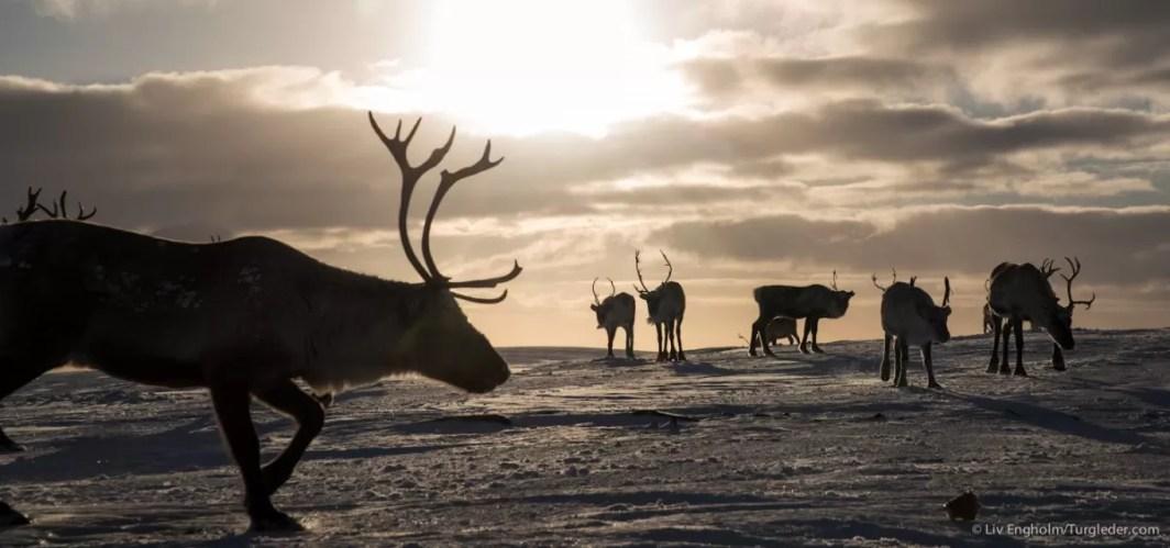 Nooit meer slapen, Finnmarkplateau Jolly Nomad 140