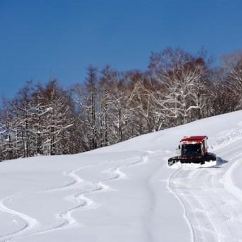 Shizukuishi operates Powder Cat Skiing runs from just ¥3500 a run. Photo by Chris Hocking