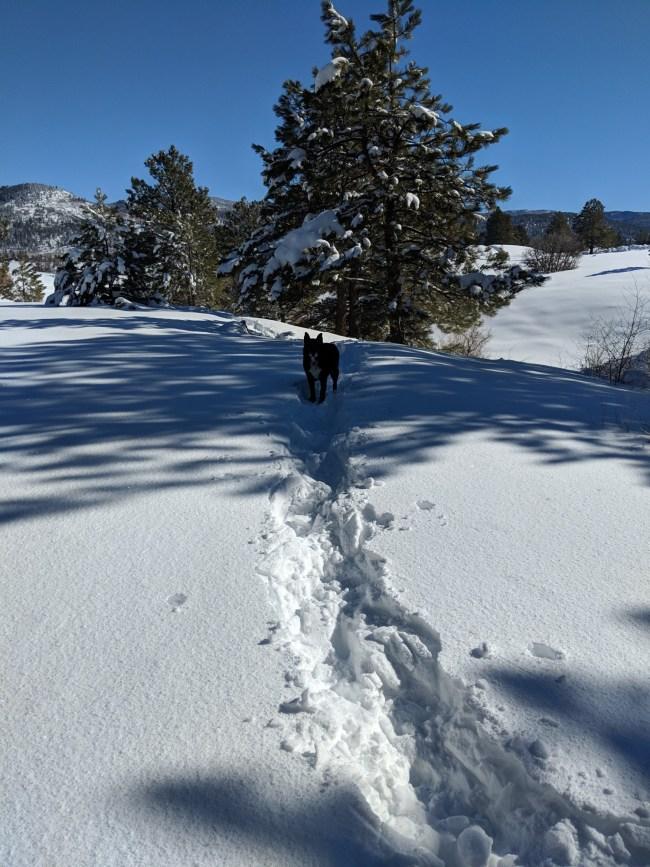 dog in deep snow looking at camera