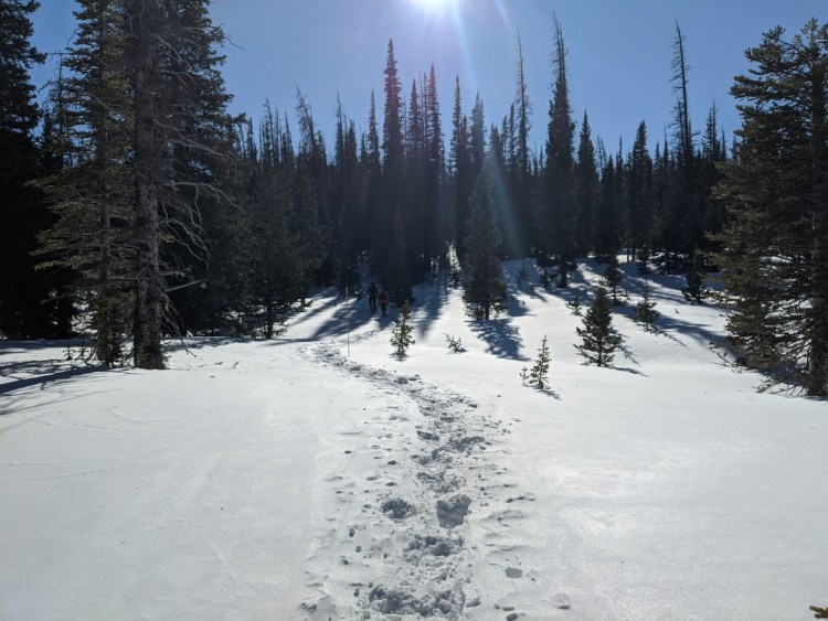 snowshoers in distance and snowshoe tracks near Zimmerman Lake, CO
