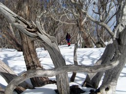 tree branches criss crossing with person standing between them in distance on snowy landscape