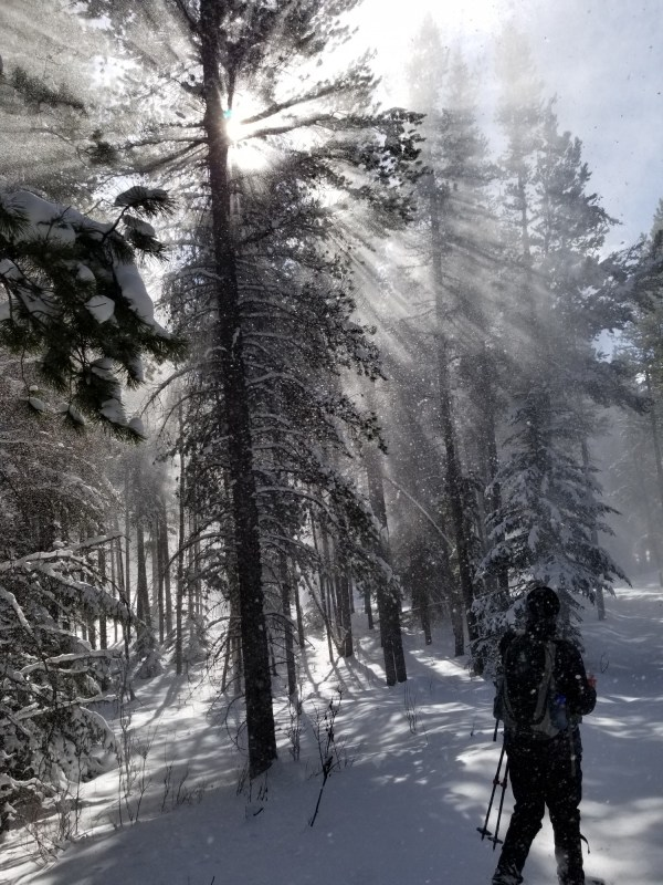 winter photo competition: person walking with sun filtering through trees