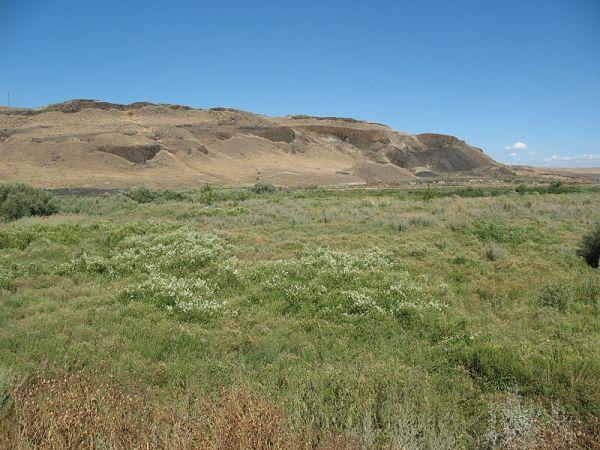 800px-Desert_meadow_in_Eastern_Washington