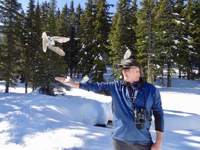 man reaching out to grey jay at Todd Lake, Oregon