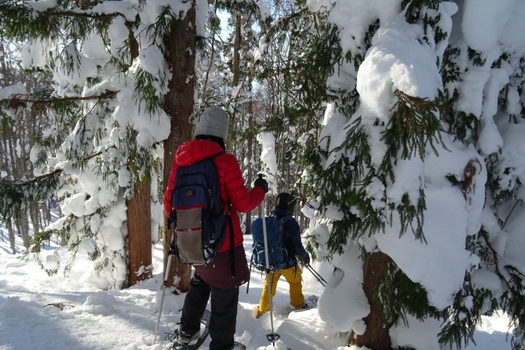 man entering snowy forest on snowshoes
