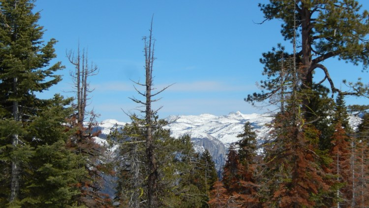 blue sky, trees, and snow-capped mountain on Ridge Trail, CA