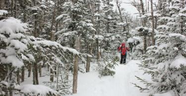 Nearing Mount Tecumseh's Summit