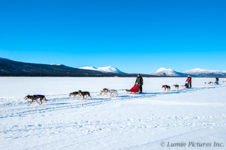 person dog sledding under bright blue sky in Yukon in winter