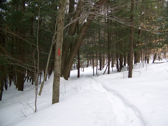 Snowshoeing Trails in Mendon Ponds, Rochester, NY