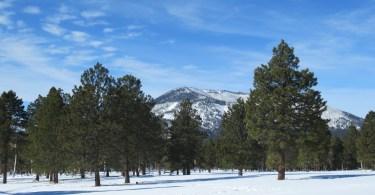 Flagstaff, Arizona- mountains, trees, blue sky
