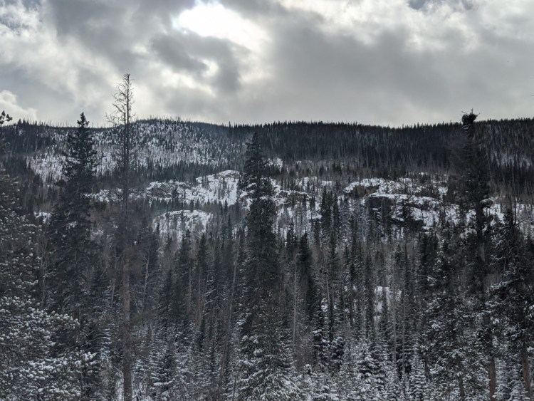 trees in snowy mountains below cloudy sky