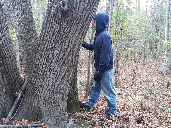 stretching heel against tree