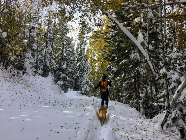hiker and pet on snowy trail in Alberta