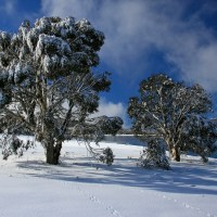 Snowshoeing on the Roof of Australia: Kosciuszko National Park