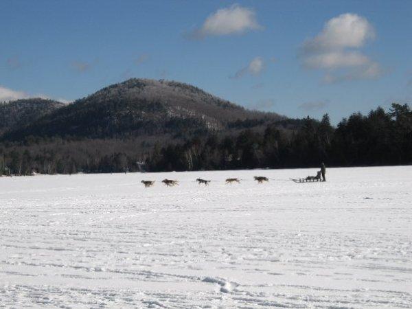 dog sledding- Empire State Winter Games