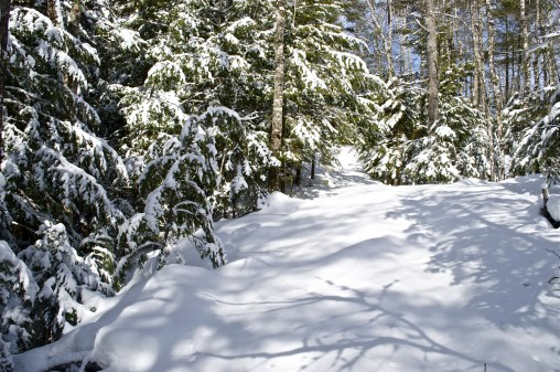 A recent snowfall blankets the woods and trail