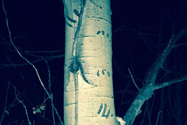 Bear claw prints on snowshoe tour (photo:  Giulliana Piedra)