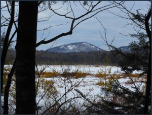 How the Heron Marsh looks when snowcovered (photo courtesy From Empty Hands Blog)