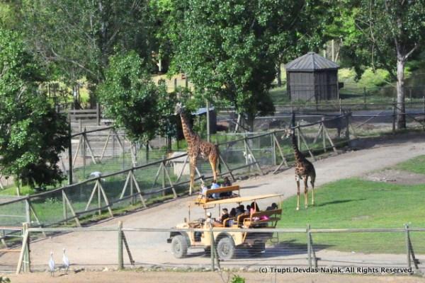 Safari_Drive_Tour