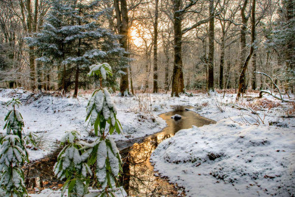 Winter in New Forest