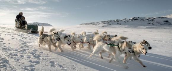 dog-sledding2