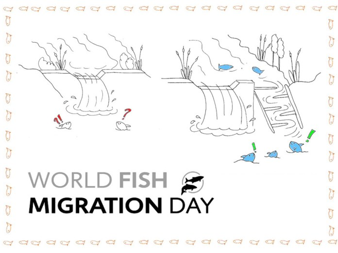 Fumetto che illustra due scale pesci: una transitabile, l'altra non transitabile a causa di barriere