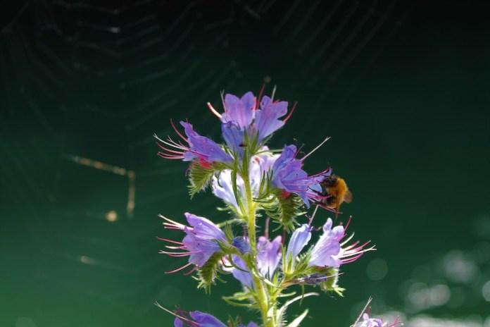 Ogni ape porta in sé il meccanismo dell'universo: ognuna riassume il segreto del mondo. – Michel Onfray
