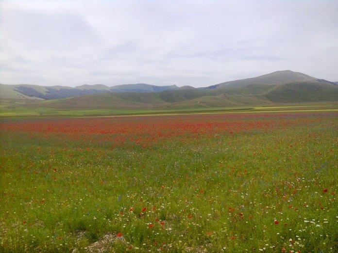 Tavolozza della natura Castelluccio di Norcia (PG)