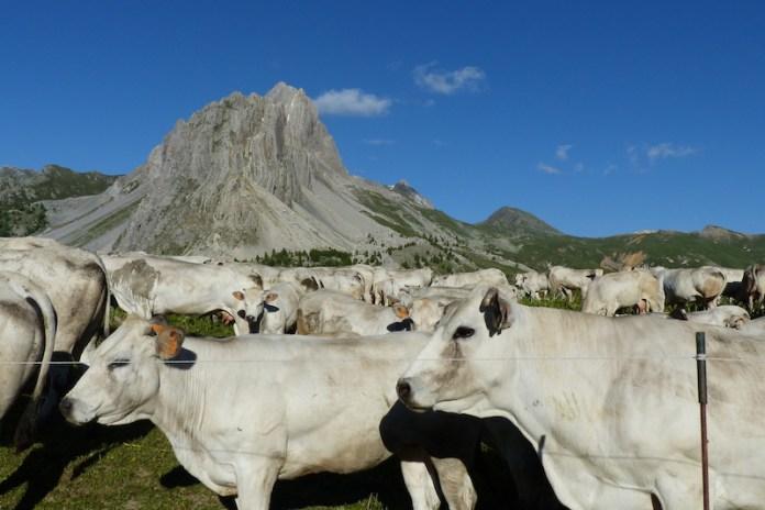 Guardiane del sacro monte. Rocca La Meja. Canosio