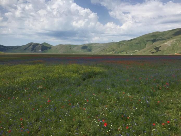 La fioritura sulla piana del Castelluccio