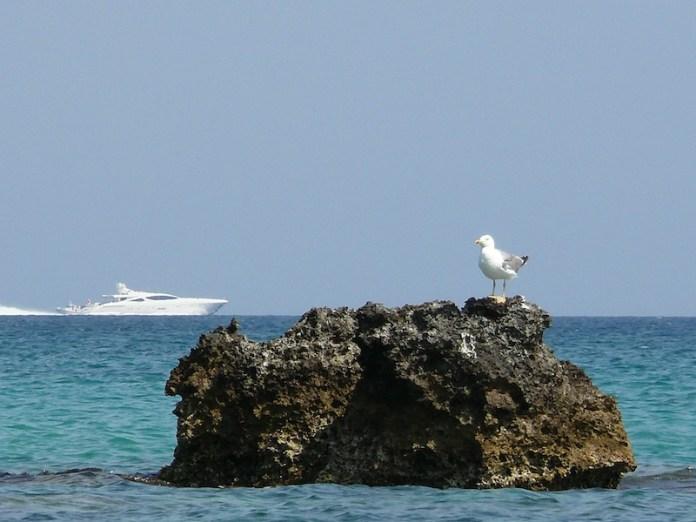 Il guardiano del mare