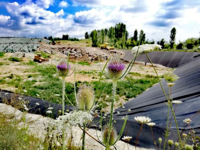 Biodiversità in discarica
