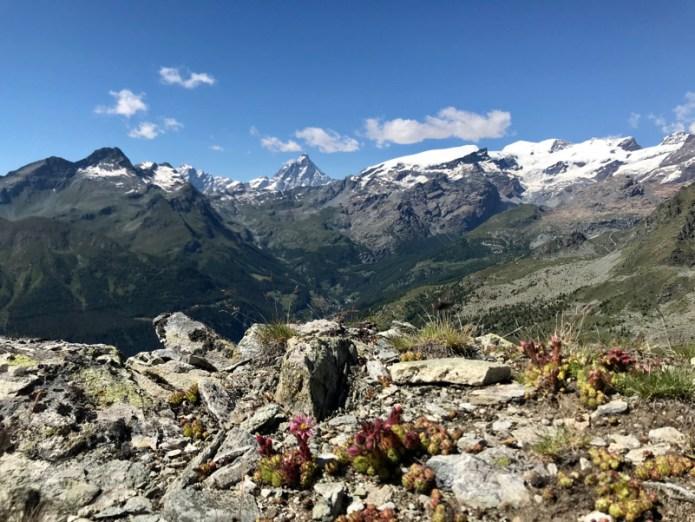 Fiori d'alta montagna