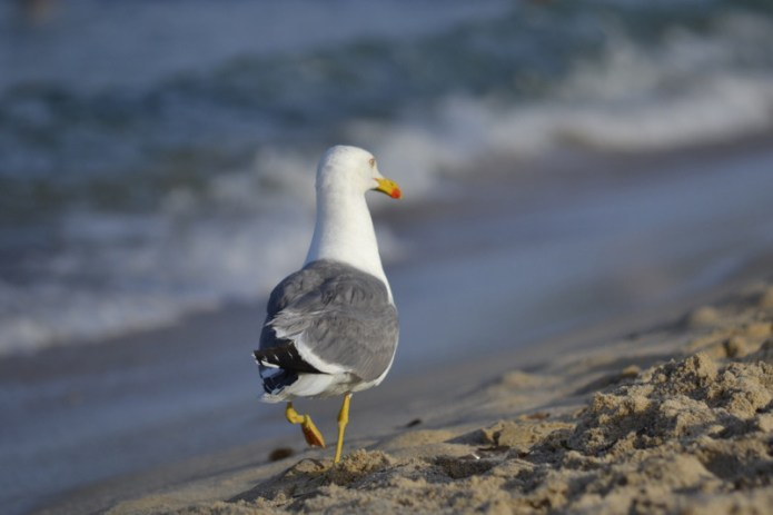 Passeggiata in spiaggia (Nora, Pula)