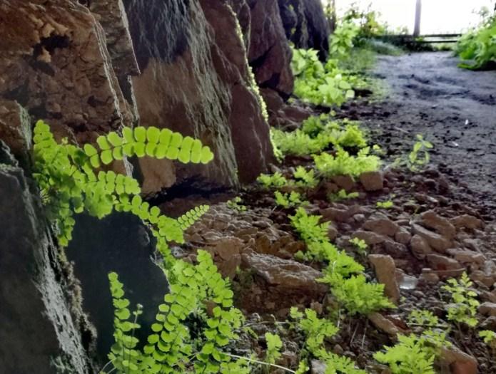 La fotosintesi in grotta - Gallerie Monte Morissolo - Linea Cadorna - Verbania